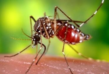 Disease outbreak news